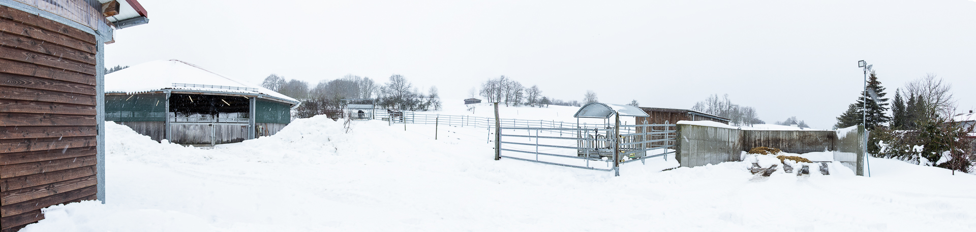 Tribussers Pferde Aufzucht, Ausbildung, Zuhause